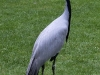 Vogelpark Walsrode 2004