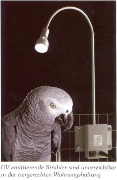 uv lampe vögel