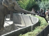 13-kali-fattert-die-elefantendamen