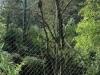 22-granflagelaravoliere
