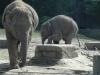 5-halberwachsenes-elefantenkind