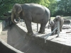 7-kindliche-albereien-unter-elefanten