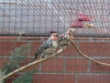 Vogelschau 2007
