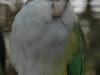 aymarasittich
